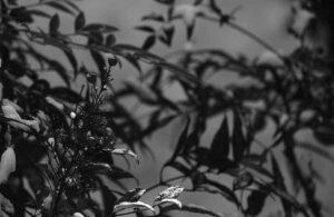 三浦春馬「公式ツイッターが無視」のまま…『天外者』ハワイ国際映画祭間もなく終了の謎